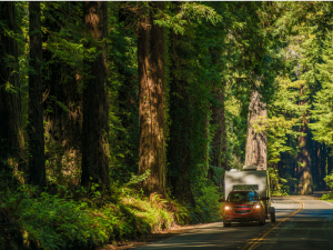 Picture of a red truck pulling a small camping trailer along a quiet road in the middle of a huge green forest.