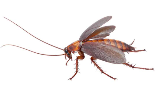Fear of Coackroaches